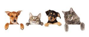 Cattery and Kennels Special Offer