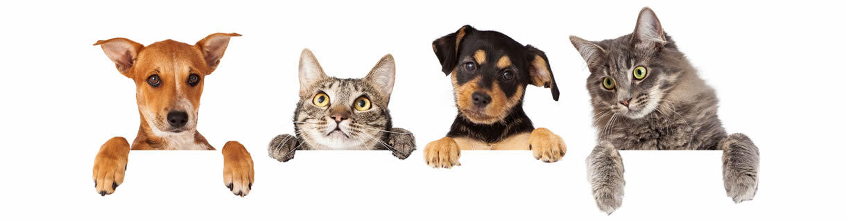 Cat and Dog Boarding